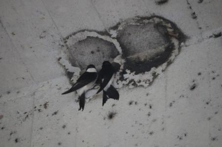 zdroj foto: SOS/BirdLife Slovensko
